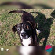 Blue - Will am liebsten der