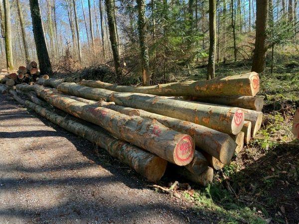 Waldfrisches Buchen Brennholz