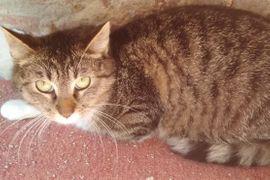 Katzen - Katze Martha gerade 1 Jahr