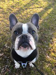 Suche Hundebetreuung ganztags