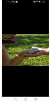 Gassi-geh-Service Hundebetreuung