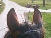 Suche eine Reitbeteiligung Reiterin sucht