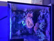 Meerwasser Aquarium 40l