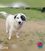 Cura - sucht einen Menschen zu
