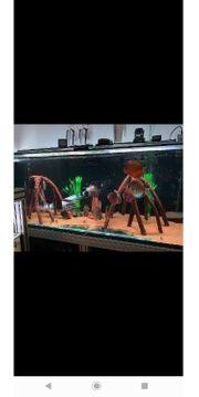 künstliche wurzel Aquarium wurzel mookien