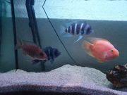 4 Fische an einen guten
