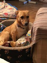 Tierschutzhund Cindy ca 10 Monate