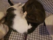 Zwei Katzen zu verschenken