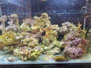 15kg Steine Korallen