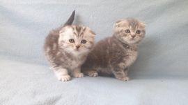 Katzenbabys zu verschenken frankfurt