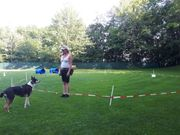 Rally Longieren - Hundeschule Amperland