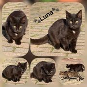 Wunderschöne Baby Katze Luna sucht