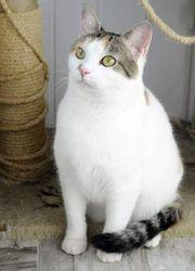 Katze Sweety sucht ihr Körbchen