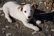 Klein bleibende Welpen vom Tierschutz