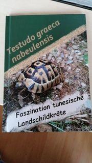 testudo graeca nabeulensis tunesische Schildkröte
