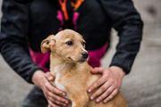 Tierschutzwelpe Ella sucht ein Zuhause