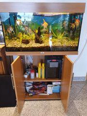 Aquarium 130 Liter komplett