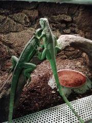 Invertebrates - Farm