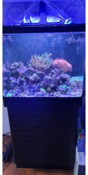 Red Sea Aquarium 130 L
