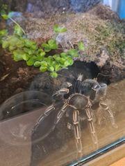 Verschiedene spinnen