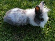 süße Kaninchen Babys auch bei