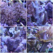 Korallen Korallenableger Meerwasser Ablegersteine