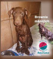 Brownie - - Gotts sei dank lebe