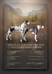 Deutsche Doggen Welpen mit Ahnentafel