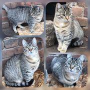 Wunderschöne Katze Carlotta 6 Monate