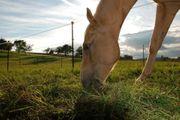 Offenstallplatz für Kleinpferd Wallach frei