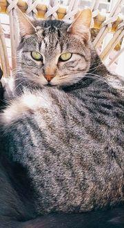 Katzendame sucht ruhiges Zuhause
