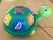 5 in 1 Lernspaß Musik-Schildkröte