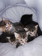 wunderschöne und süße Katzenbabys