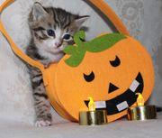Wunderschöne Kätzchen suchen Zuhause für