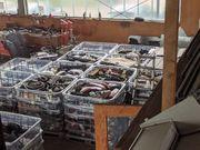 Auflösung Autowerkstatt Über 5000 Einzelteile