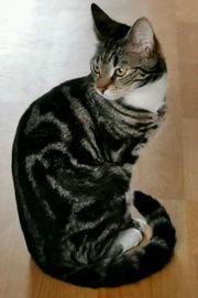 EKH Katze sucht dringend ein
