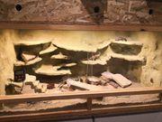 Terrarium mit Lepardengekos