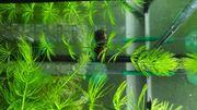 Biete schnellwachsende Pflanzen im Doppelpack