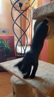 Katzensitter Katzenbetreuung Katzenpension