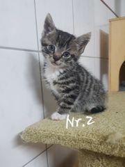 EKH Katzen