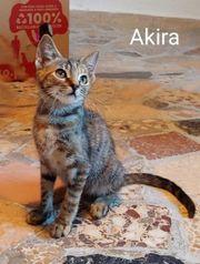 Ambar und Akira ein tolles