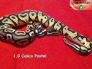 1 0 Calico Pastel