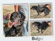 Bulgur - großes Herz auf 4