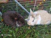 Ein Paar Kaninchen zu verkaufen