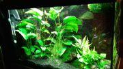 Aquarium Rio 125l