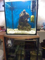 Komplettes Seewasseraquarium mit allem was