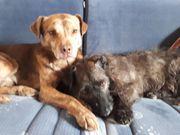 zwei Hundesenioren suchen Sitter