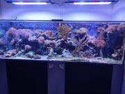 Meerwasseraquarium komplett mitTechnik Fischen Korallen
