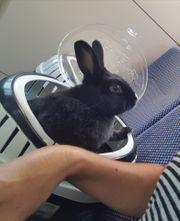 Kaninchenmädel Susi kastriert 4 J