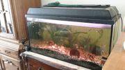 Aquarium mit 35 Süßwasserfischen und